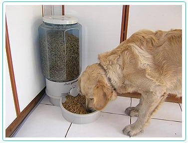 Accesorios para perros cositas femeninas for Dispensador de comida para perros